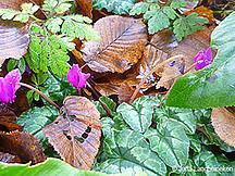 Braune und grüne Blätter gemischt