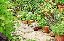 Gartenweg mit Kübelpflanzen