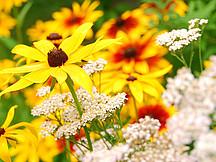 verschiedene Blüten
