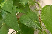 Mit Wassertropfenbesprühte grüne Pflanzenblätter