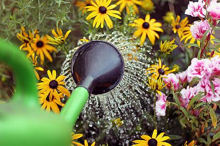Gießkanne und Blumen