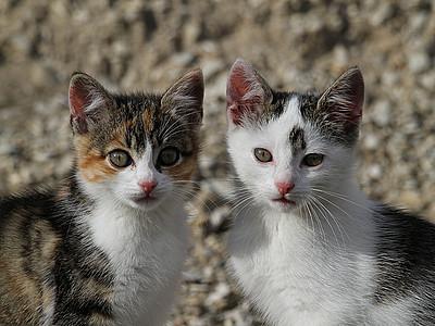 Zwei ausgesetzte Kätzchen