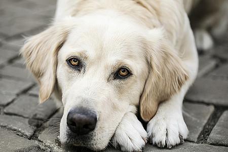 Lotte - Studiohund und Gute-Laune-Macher