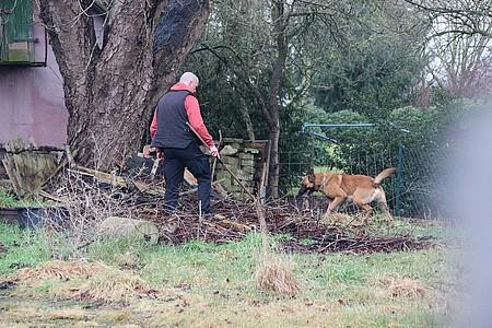 Spürhund auf der Suche